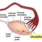 Anovulacion desde dentro de la mujer