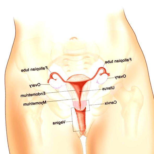 cancer-de-ovario - cancer de ovario diagnostico