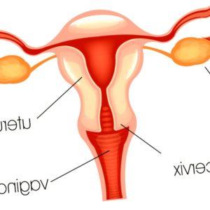 cancer-de-ovario - cancer de ovario mas frecuente 300x300